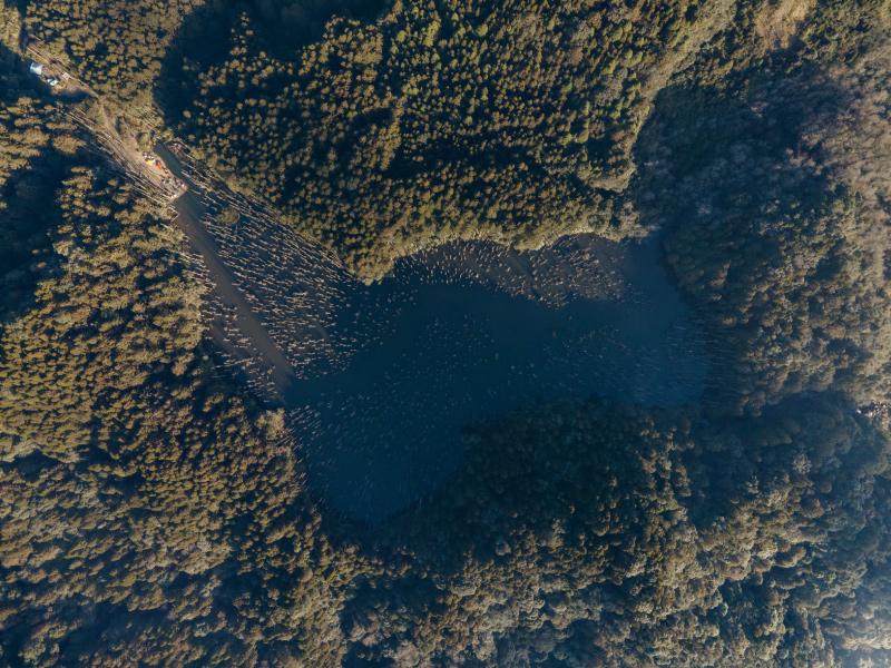 引⼈駐⾜仰望的枯立⽊聚落 — ⽔漾森林